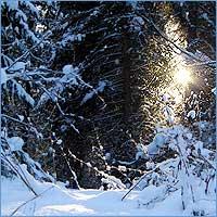 Рождество Христово в Томске