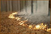 Православные верующие Томской епархии собирают помощь пострадавшим от пожаров в России